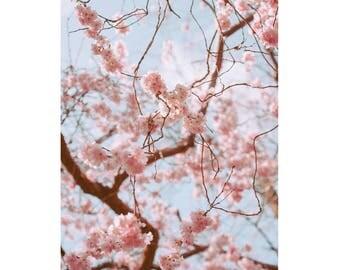 Blossom Print, Cherry Blossom Photography, Vintage Blossom Print, Pink Blossom Print, Pink Art Prints, Blossom Art