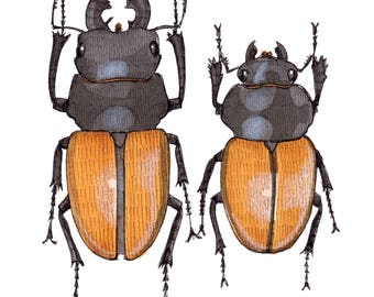 Stag Beetle pair Greeting CARD. Blank inside
