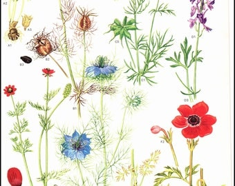 Mediterranean Wildflowers Plate 27 painted by Barbara Everard. Page is approx. 9 inches wide and 12 inches tall.