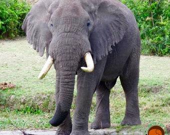 Elephant Photography- Fine Note Card