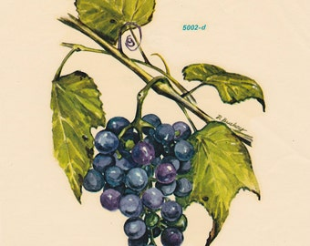 Crafting Decal Grapes on the Vine by MEYERCORD USA Mirror Decor