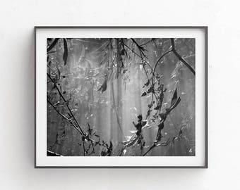 Black and white print, Nature prints, Photography, Bedroom wall decor, Black white arts, Printables, Botanical print, Downloadable arts