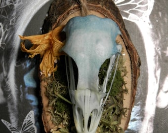 Real Dyed Quail Skull Display
