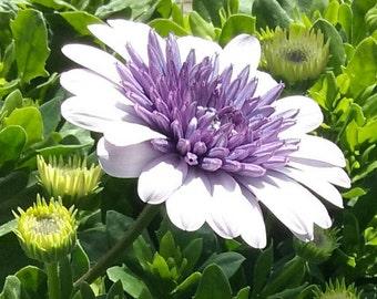 Floral Colection