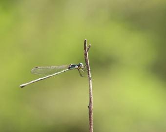 Dragonfly | Photo print