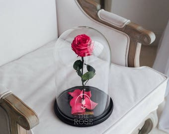 Beauty and the beast rose (Hot pink) — Perfect gift for her, Rose in glass dome, Enchanted Rose, Forever rose, Preserved rose