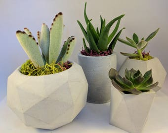 Planter | Succulent Planter | Concrete Planter | Geometric Planter | Succulent | Handmade Planter | Home Decor | Plant Pot | Planter Set