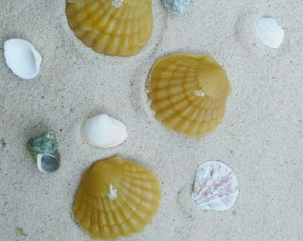 Sea Shell Beeswax Candles ~ Tealight Shells ~ Beach Wedding Favors~ Tiki Party ~ Beach House Decor ~ Surf Candle