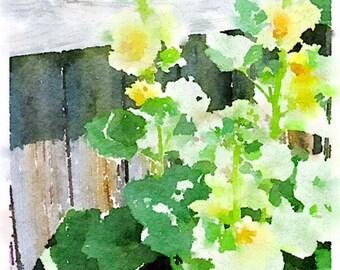 Yellow Hollyhocks