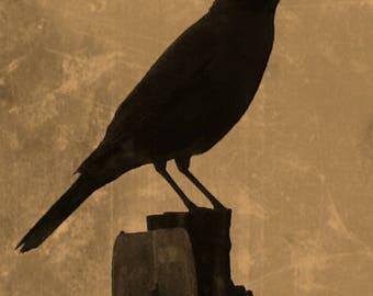 Crow Notecard Blank
