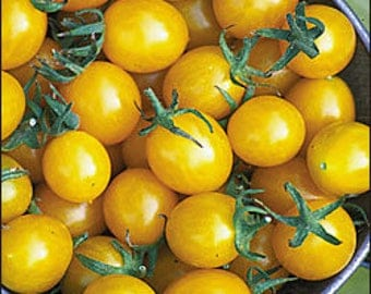 Tomato Blondkopfchen Cherry Golden Yellow 70 days, 25 seeds