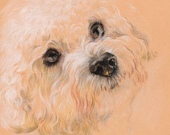 Bichon Frise. Pastel Portrait on colored paper.
