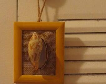 shell in frame