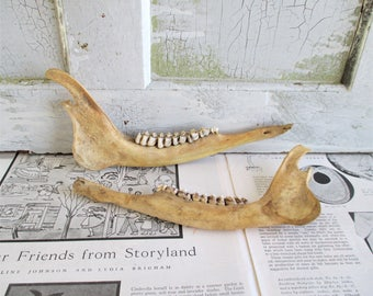 Pair of Vintage Deer Jaw Bones