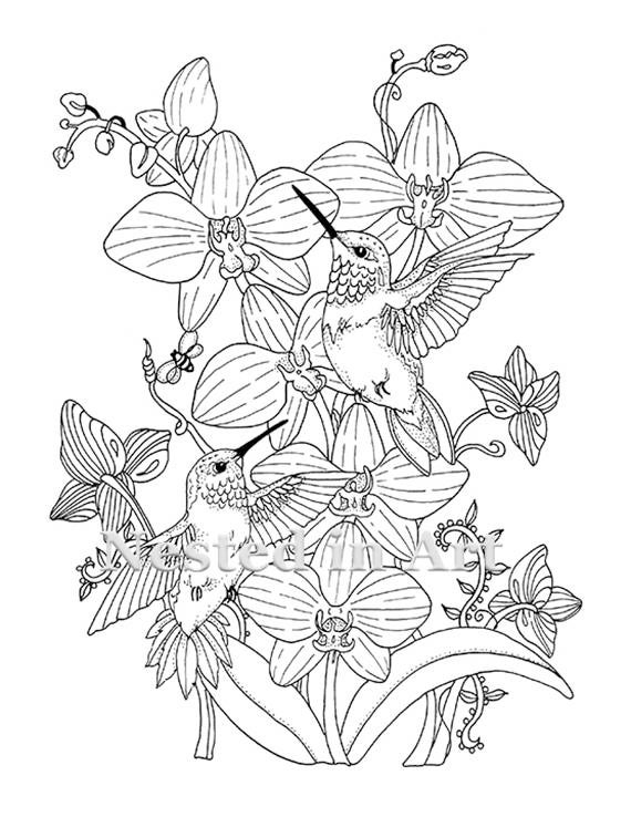 Adult Coloring Page Hummingbirds and Orchids Digital