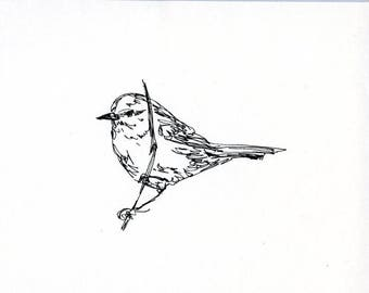 Sketchbook Sale - Bird #32 Original Ink Line Drawing - 8x10 Songbird Original Art