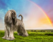 Dollhouse Miniature Standing Afghan Hound Artist Sculpted Furred OOAK Dog 1:12 Scale