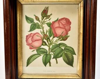 Vintage Framed Floral Print * Catherine Bell Rose * wall art * framed art * home decor * shabby chic * cottage