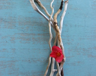 Squiggly Curly Driftwood Collection , Natural Art supply , Driftwood Decor 12 Pieces SQ5