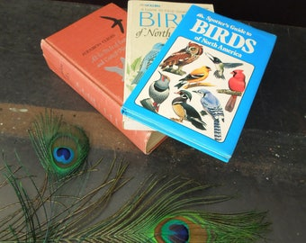 Bird Book Collection - Vintage Reference Books on Birds - Spotter's Guide North America - Audubon Guides Eastern Central