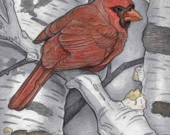 Cardinal in Birch Tree....Original Art