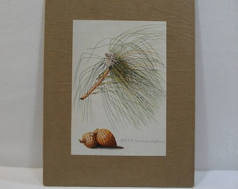 French Country Rustic Wall Art / Pine Bough Wall Art / Recycled Book Plate Wall Art Ready To Hang or Frame