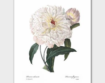 Shabby Chic Nursery, Peony Art (White Wall Decor, Cottage Chic Print ) Redoute Flower