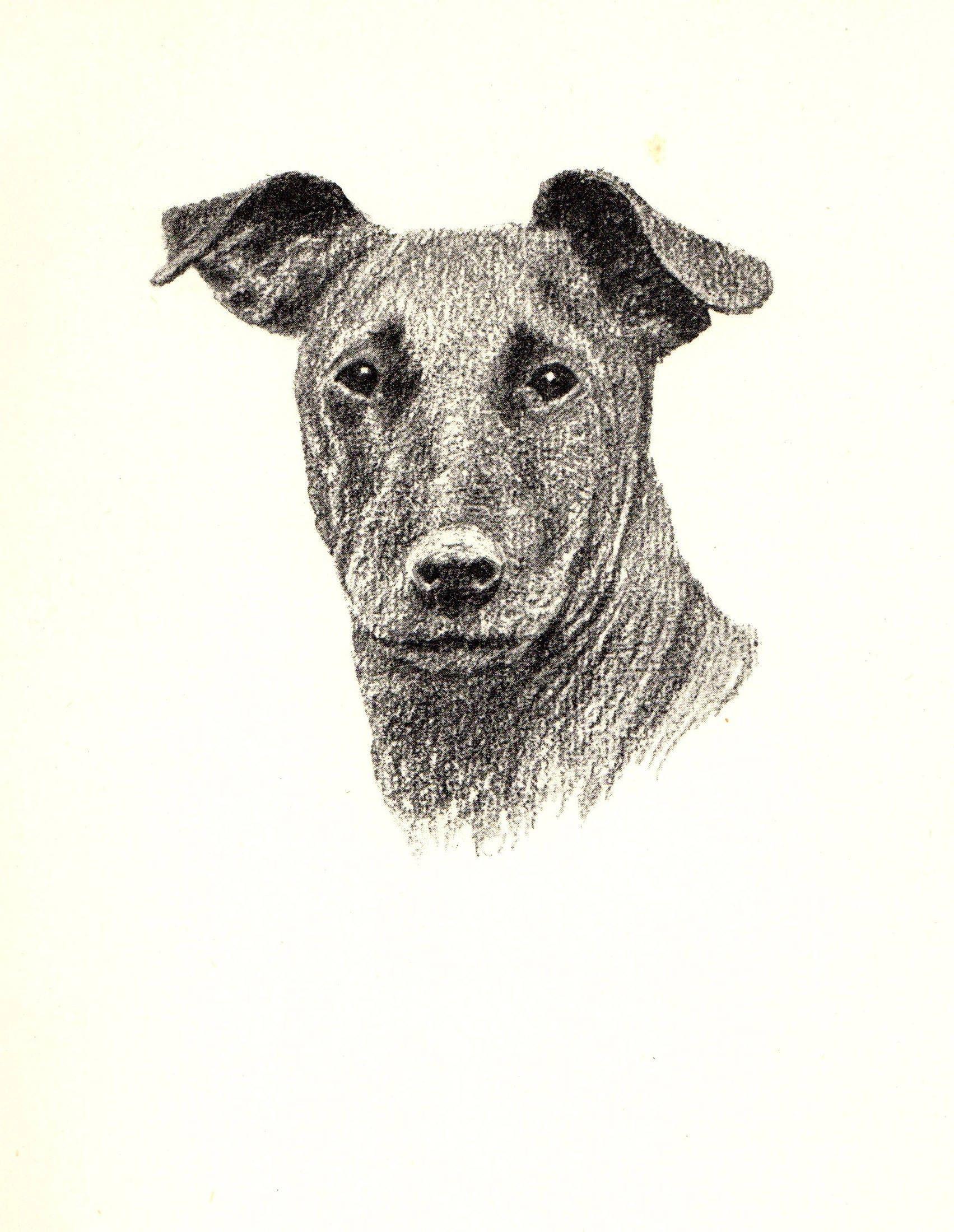 1935 Vintage Manchester Terrier Dog Print Antique Dog Pet Art Office ...
