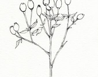 Rose Hips - Original botanical ink illustration