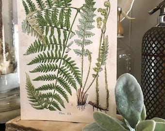 Vintage FERN Wood Sign Print Farmhouse Decor Page Wall Art Print  Fixer Upper Spring Summer Decor