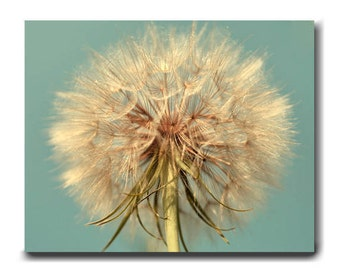 Dandelion canvas wall art, large wall art canvas, Dandelion photography shabby chic decor, floral wall art botanical print, aque beige brown