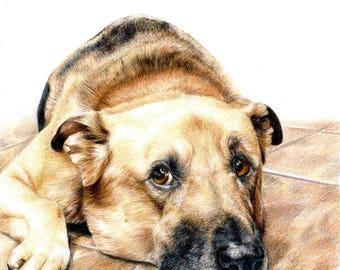 CUSTOM Pet portrait drawing - dog cat portrait