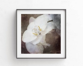 Rustic home decor Printable rustic wall art 10x10 Living room decor New home gift White orchid Shabby chic wall art Home decor rustic Iviory