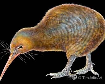 Kiwi Colored Pencil Drawing