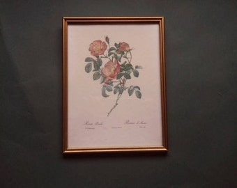 Redoute Rose Book Plate  Picture in Vintage Frame