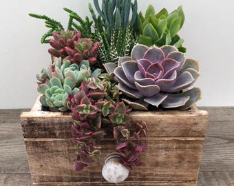 Succulent Arrangement- Small Rustic Drawer