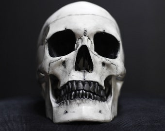 Ally Snow - Black & White Distressed Life Size Realistic Faux Human Skull Replica with Removable Jaw / Art / Ornament / Home Decor