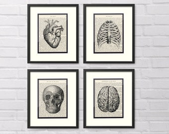 Anatomy Art - Set of 4 - Heart, Chest, Skull, Brain over Vintage Medical Book Pages - Medical Office Decor, Medical Student Gift, Medcal Art