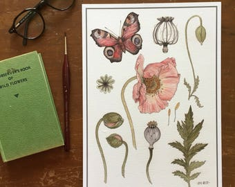 Poppy Study A4 Giclee Print - Botanical Flowers