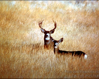 Poster, Many Sizes Available; Mule Deer