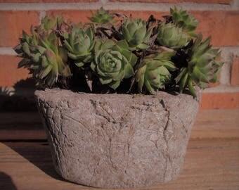 Hypertufa Sucullent / Herb Special Concrete Blend Planter