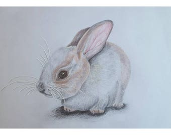 Rabbit Kitten - Signed Limited Edition A4 Print of an original pencil drawing.