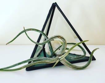 Airplant & glass prism/ airplant/ tillandsia/ planter/ terrarium/ prism