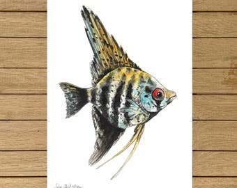 Zebra Angelfish, Giclée Print, Watercolour Illustration, A3 A4 or A5 size