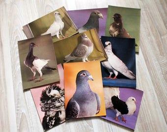 Collectible pigeon postcard set - Vintage dove postcards - Vintage bird postcard set - Collectible bird postcards - Dove photo print set