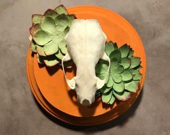Mink Skull Plaque