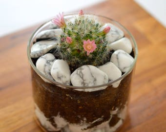 Decretive howlite pebbles