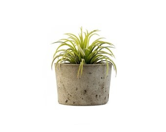 Small Cylinder Planter