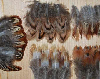 F15-Lot/Set-set of natural pheasant feathers / Pheasant - 4/5cms x30plumes