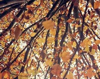 Fall wall art, fall nature photography, fall art print, fall leaves print, fall fine art photography, fall rustic home decor, fall print